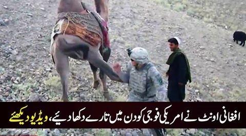 افغانستان میں اونٹ بھی امریکی فوجی کو برداشت نہ کرسکا