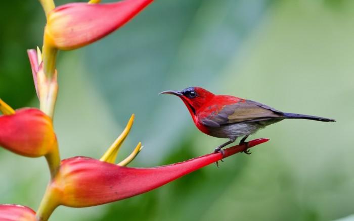 پرندوں کی غائب ہوتی آوازیں:خیبرپختونخوا کے حیاتی تنوع کیلئے خطرہ