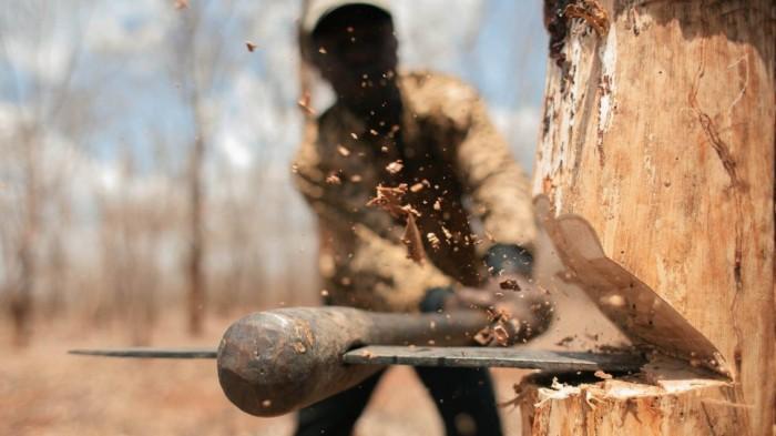 جنگلات کا عالمی دن اورماحول دشمن 'ترقی'