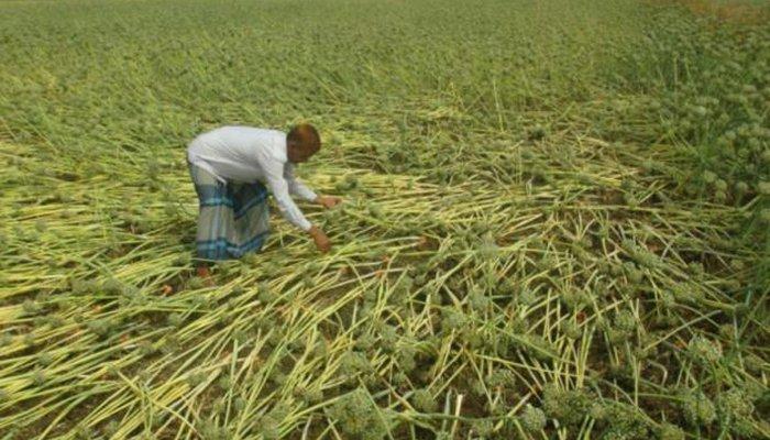ملتان میں ژالہ باری نے تباہی مچادی، ہزاروں ایکڑ پر تیار فصلیں متاثر