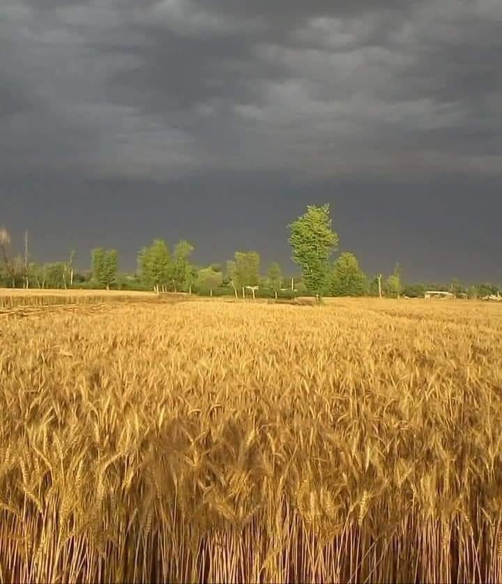 کسان پریشان معیشت کو نقصان