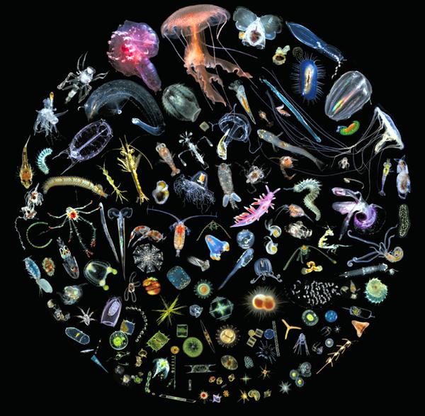 سمندروں میں دو لاکھ نئے وائرس دریافت