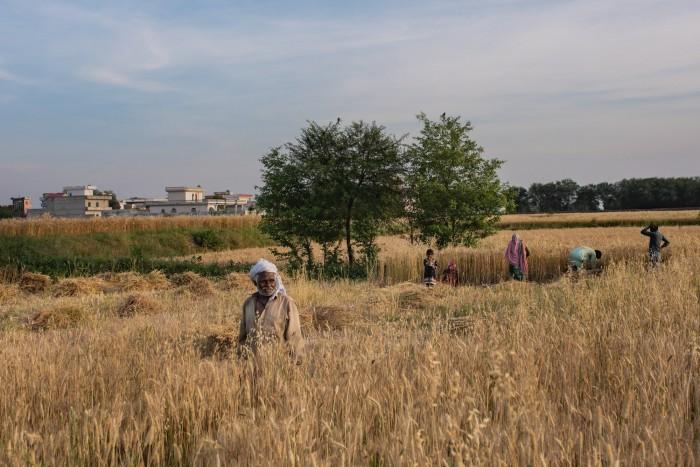 تصاویر اور سافٹ ویئر سے فصلوں کی 97 فیصد درست پیشگوئی