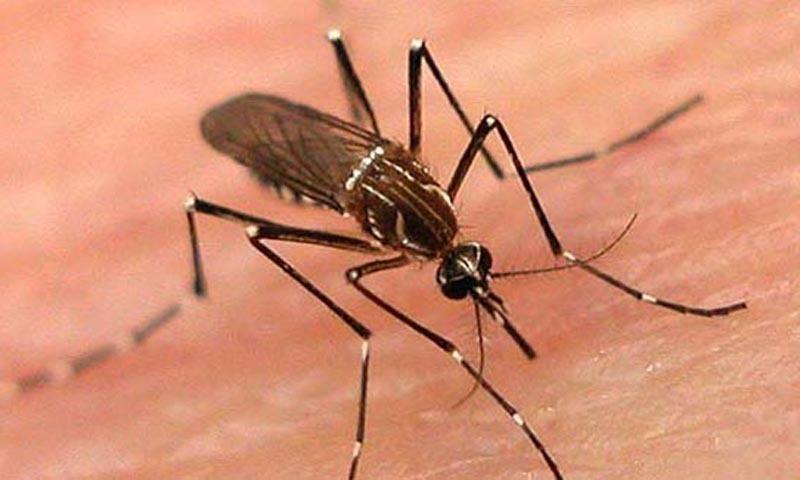 خیبر پختونخوا : ڈینگی سے متاثرہ مریضوں کی تعداد 3800 تک پہنچ گئی