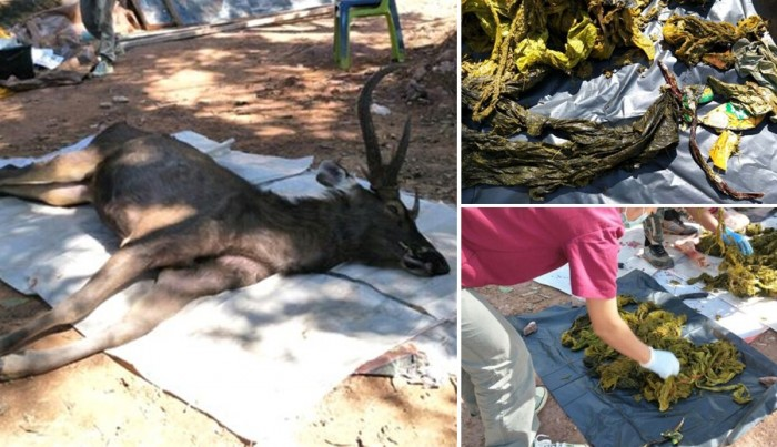 مرے ہوئے ہرن کے پیٹ سے 7 کلو پلاسٹک برآمد